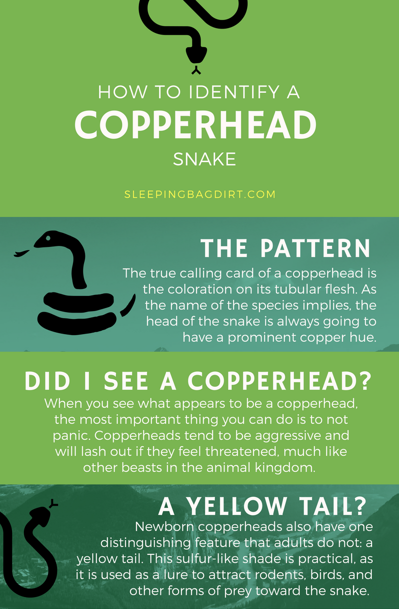 How to identify a copperhead